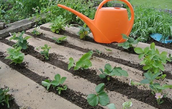 How to Pallet Garden