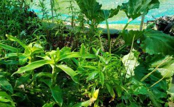 community plants