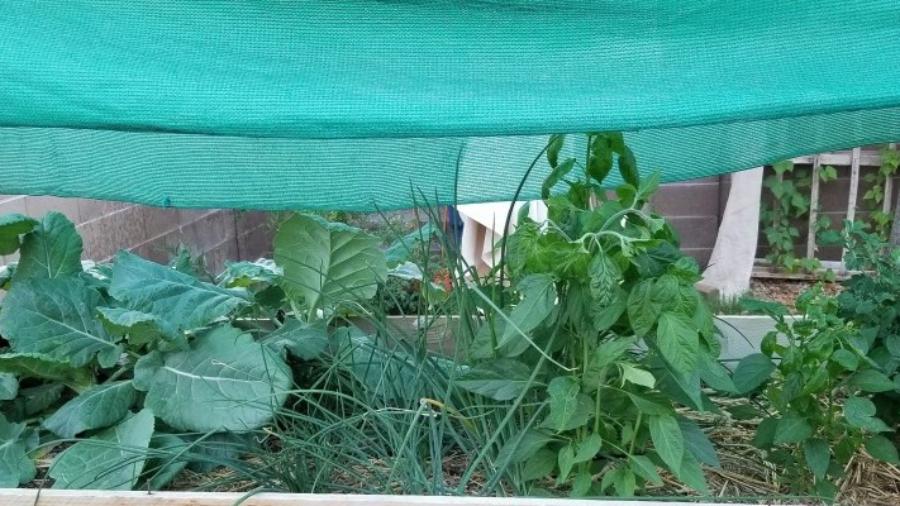 happy shaded plants
