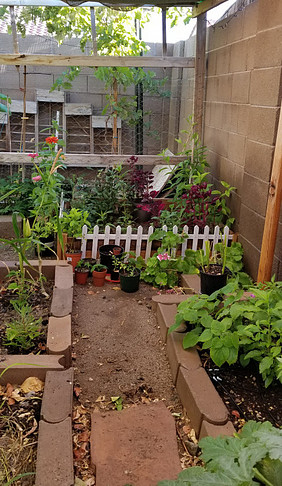 When Shelter-In-Place Start A Vegetable Garden.